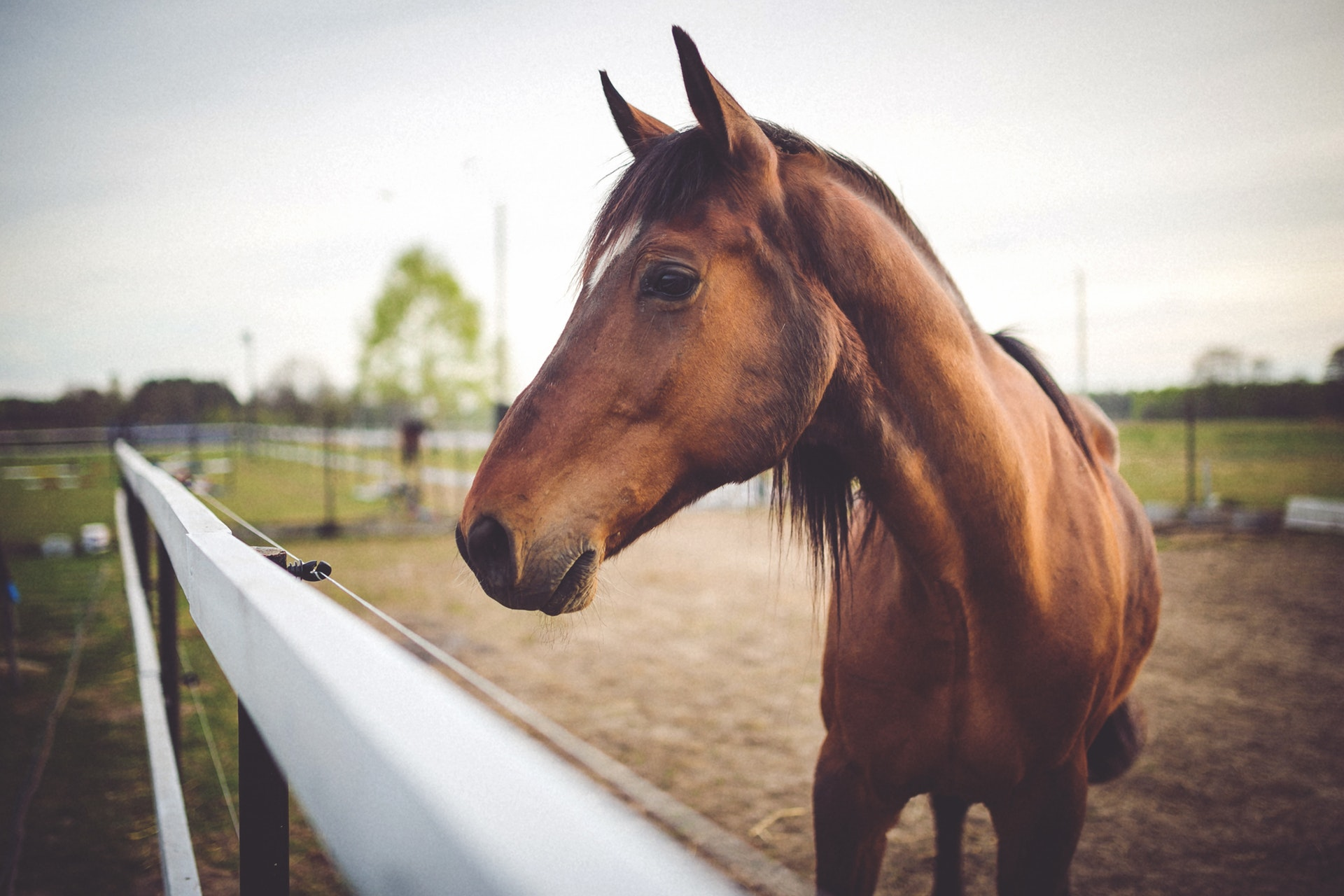 What a Horse Taught Me about Grief and Play